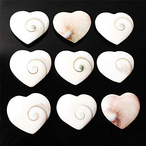 wangxiyan 9Pcs Natural White Sun Shell Heart Cicular Shaped Polished Pendant Jewelry Collection Ammonite Fossil Gift(Multi-Color,Round) (Polished Shell Pendant)