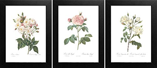 Ink Inc. Roses Botanical Prints Wall Art, White Home Decor, Redoute, Unframed 8x10 inch