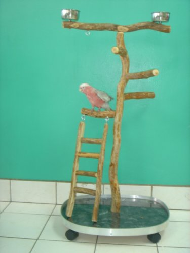 Small Playgym with Ladder (23''x22''x3/4'' plywood/formica base)