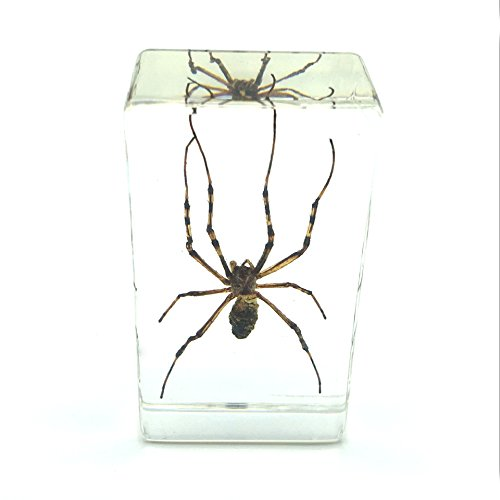 Paperweight Shape Acrylic (Spider Paperweight Specimen Paperweight for Science Education for Book for Office for Desk)