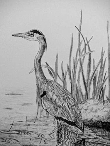Bird 03 Ball Point Pen Drawing By Biju Puthiyapurail Biju