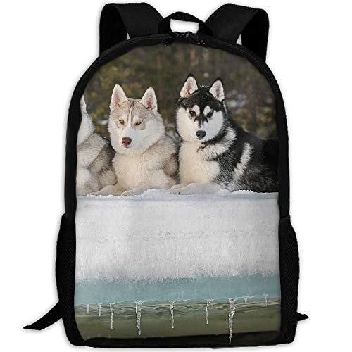 KIENGG Sled Dog Siberian Husky Alaskan Malamute Unisex Adult Unique Backpack,School Leisure Sports Book Bags,Durable Oxford Outdoor College Laptop Computer Shoulder Bags,Lightweight Travel Daypacks