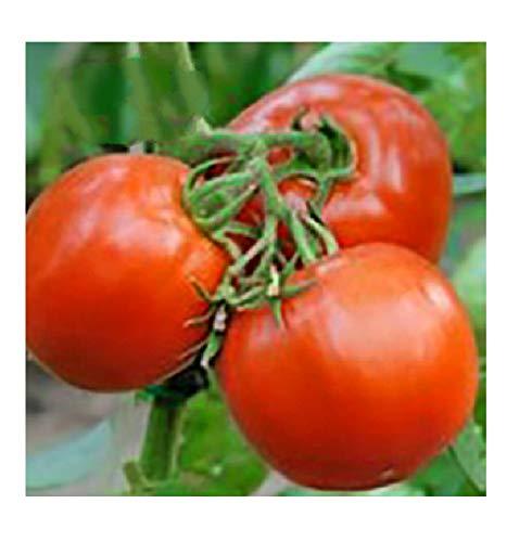 Seeds Creole Tomato Non-GMO 250 Seeds
