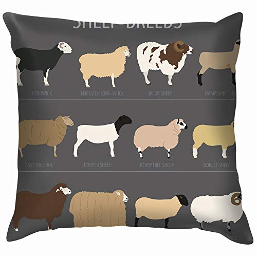 Sheep Breed Icon Set Farm Animal Animals Wildlife Cotton Throw Pillow Case Cushion Cover Home Office Decorative, Square 26X26 Inch