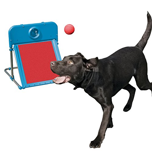 Agility Flyball - Dog play & exercise toy