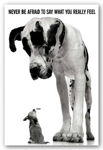 amazon com never be afraid to say what you really feel poster dog