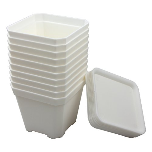 BangQiao 3.90 Inch Plastic Flower Pots for Plants,Cutting,Seedlings, Pack of 10 (White)