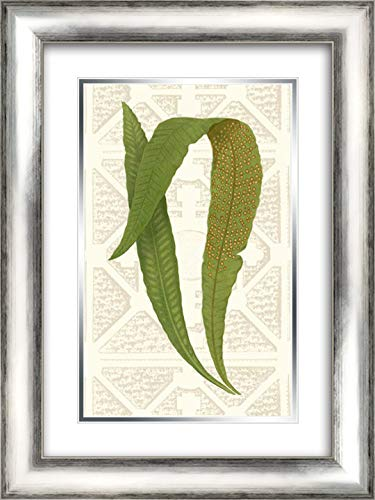 Garden Ferns IV 18x24 Silver Contemporary Wood Framed and Double Matted Art Print by Vision Studio (Wood Fern Garden)