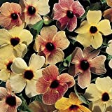 Thunbergia Spanish Eyes Mix PLANT