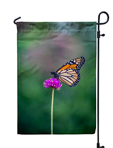 Shorping Yard Garden Flag, 12x18Inch for Holiday and Seasonal Double-Sided Printing Yards Flags Monarch Butterfly or Simply Monarch Danaus plexippus is Milkweed butterf -