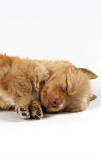 Journal: Sleeping Puppy: Lined Journal, 120 pages, 5.5