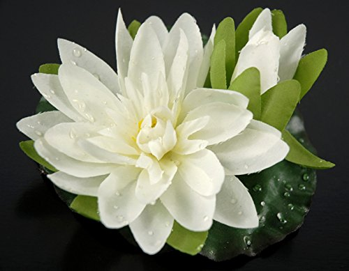 Dexon Power 12 Floating Lotus with Water Drops Cream 4 Inch