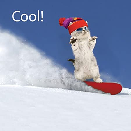 Cool Snowboarding Kitten Cat Greeting Card By Jane Burton Amazon Co Uk Kitchen Home