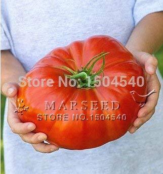 Fash Lady 25 semillas nutritivas de tomate de sandía Filete de tomate, sabor enorme y rico, fácil de cultivar El bistec más grande del mundo Generic