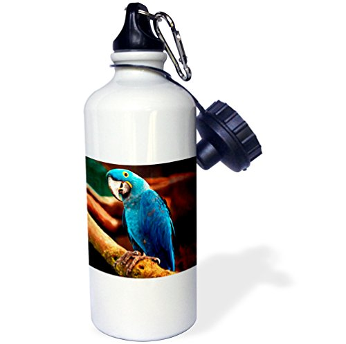 3dRose wb_954_1 Hyacinth Macaw Sports Water Bottle, 21 oz, White