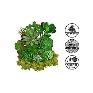Fake Foliage 14 pcs Assorted Large + Small Size Artificial Unpotted Succulents + Reindeer Moss, Mixed Faux Succulent Picks Floral Arrangement, Home Decor Accent, DIY Craft, Plants Decoration 2