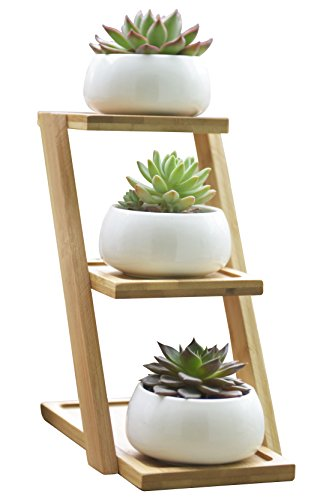Jusalpha Ceramic Modern Decorative Small Round Succulent Plant Pot w/ 3 Tier Bamboo Stand-Window Display-Home Decoration (White)