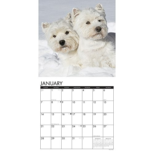 Westies 2018 Wall Calendar Photo #2