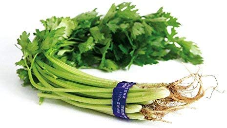 Herbal seeds 10 g of celery, Chinese parsley, vegetable garden, organic green vegetables, fresh seeds to plant indoors or outdoors for cooking, soup, salad, delicious flavor: