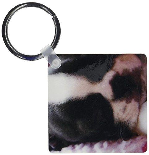 3d Rose 3dRose Boston terrier puppy - Key Chains, 2.25 x ...