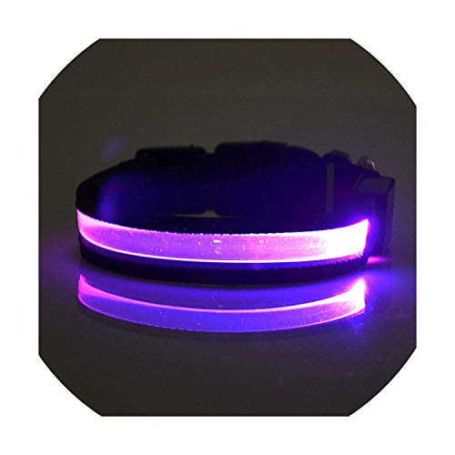 Lettering Pet Collar Night Safety Flashing Dog Cat Collars Lettering Service Name Tel Necklace Collar Luminous Pet Supplies,Battery -