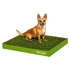 Real Grass Dog Potty (Disposable) - Medium 20in