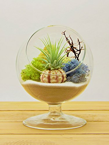 Bliss Gardens Air Plant Terrarium / 4