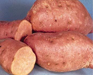 Centennial Sweet Potato Plants/Slips - America's most popular sweet potato, good for short-season areas. (1, 10 slips)