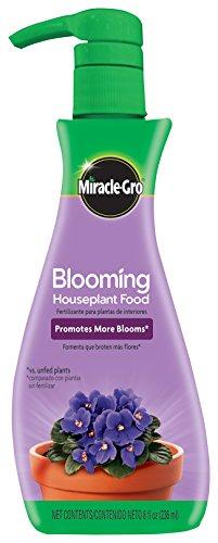 Flowering African Violet (Miracle-Gro Blooming Houseplant Food, 8 oz.)