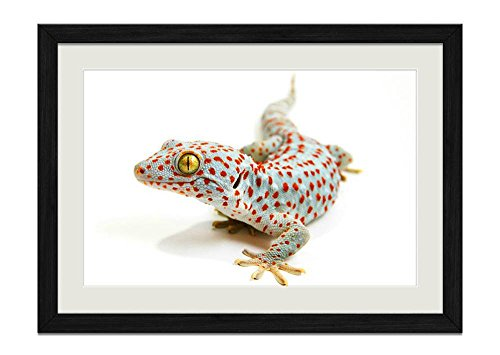 (CU.RONG Tokay Gecko Wood Frame Poster Home Art Deco Picture Print Framed Painting(12x16 in Black Frame))