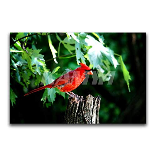 HaoHuaman Square Diamond Embroidery Cross Stitch Animal Full Round Diamond Mosaic Red Parrot 3D DIY Diamond Painting Bird Square Drill70x105cm -