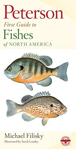 Peterson First Guide To Fishes Of North America