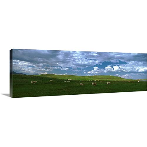 - GREATBIGCANVAS Gallery-Wrapped Canvas Entitled Charolais cattle's grazing in a Field, Rocky Mountains, Montana by 60