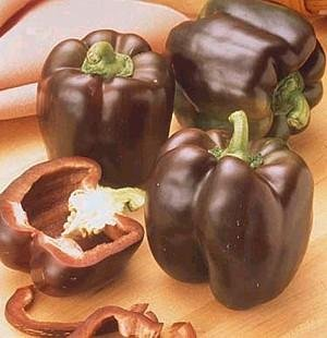 Pepper Sweet Chocolate Beauty Bell ~ BULK 500 seeds Great Heirloom - Chocolate Bell Pepper