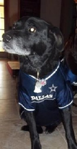 cheap for discount 5145c fb779 Pets First Dallas Cowboys Dog Jersey Licensed NFL (XXL)
