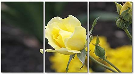 35x50CM X3枚 アートパネル 完成品( 黄色はクローズアップ花バラ) モダン 特大 写真 アートフレーム 絵画 壁飾り キャンバス絵画 パネル装飾画(木枠付きの完成品)