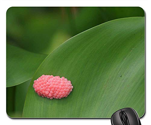 - Mouse Pads - Egg Snails Pink Reproduction Animal World