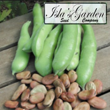 Fava Broad Windsor Seeds, 20 Premium Heirloom Seeds, ON SALE!, (Isla's Garden Seeds), Non Gmo Organic Survival Seeds, Highest Quality!