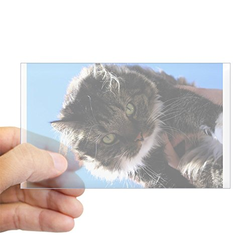 Own Kitty (CafePress - Kitty Owns You Rectangle Sticker - Rectangle Bumper Sticker Car Decal)