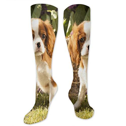Compression Socks Cute Pet Cavalier King Charles Spaniel Socks Knee High Socks PersonalizedFor Running,Athletic,Travel,Pregnancy