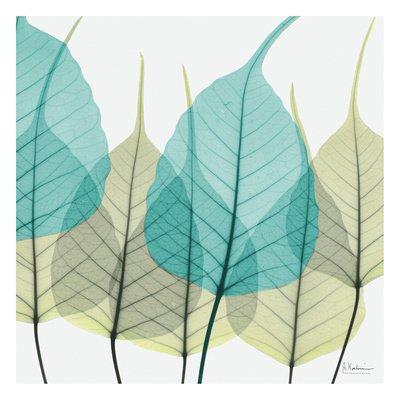 bodhi-tree-art-poster-print-by-albert-koetsier-13x13