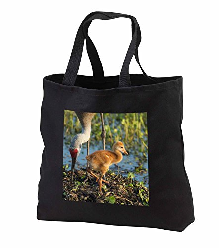 Price comparison product image Danita Delimont - Sandhill Crane - Sandhill Crane with colt on nest, Florida - Tote Bags - Black Tote Bag 14w x 14h x 3d (tb_250776_1)