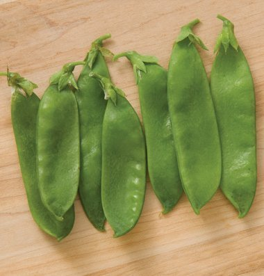David's Garden Seeds Pea Avalanche Snow Pea DGS3040ZW (Green) 200 Open Pollinated Seeds