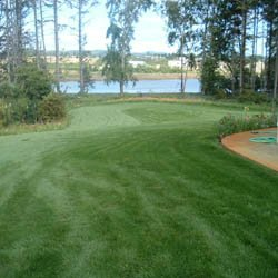 Outsidepride Combat Extreme Turf Type Fescue Grass Seed For Transition Zone - 5 LB