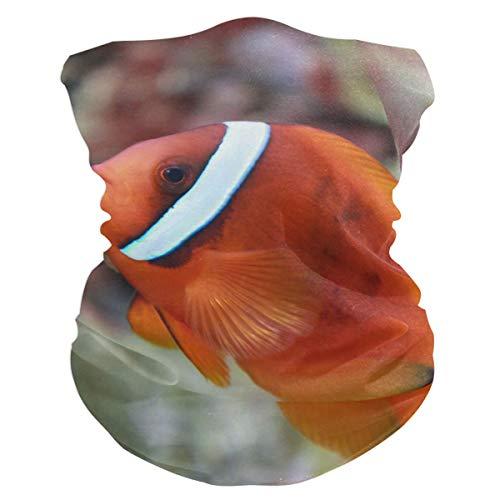 Tomato Clownfish Balaclava Womens Headband Scarf Mens Versatile Bandana, Muffler, Neck Gaiter, Magic, Hatliner Neckerchief
