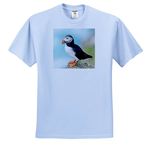 Danita Delimont - Puffins - Atlantic Puffin Looks Out From Rocky Perch. Scotland, Shetland Islands - T-Shirts - Youth Light-Blue-T-Shirt Med(10-12) (TS_257925_61) (Atlantic Puffins Perch)