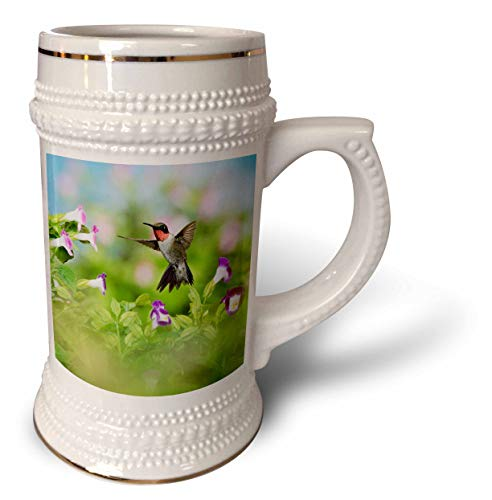 3dRose Danita Delimont - Hummingbirds - Ruby-throated Hummingbird male feeding on Wishbone flower, Texas, USA - 22oz Stein Mug (stn_315052_1) ()
