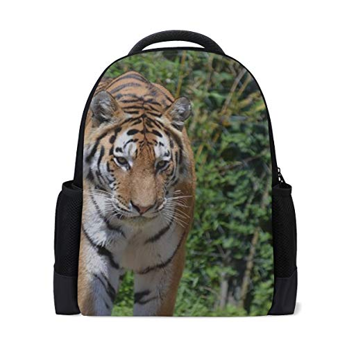 - Your Home Backpack Tiger Bengal Tiger Close Up Pride Waterproof Travel Daypack School Bag Lightweight Simple Backpack
