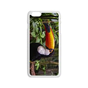 Toucan Parrot Hight Quality Plastic Case for Iphone 6