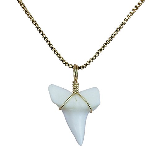 - GemShark Real Sharks Tooth Necklace 14 K Gold Plating Box Collarbone O Chain Charm for Girl ... (0.7 in Mako)